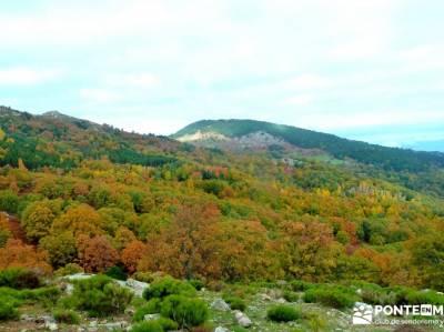 Castañar de El Tiemblo - Pozo de la Nieve - Garganta de la Yedra, foro senderismo madrid